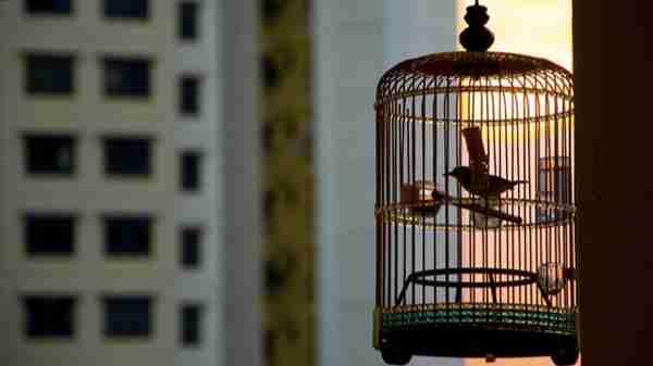 पिंजरे के पंछी