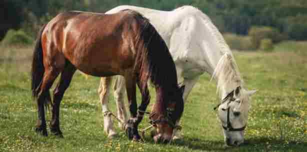Horse Amazing Facts