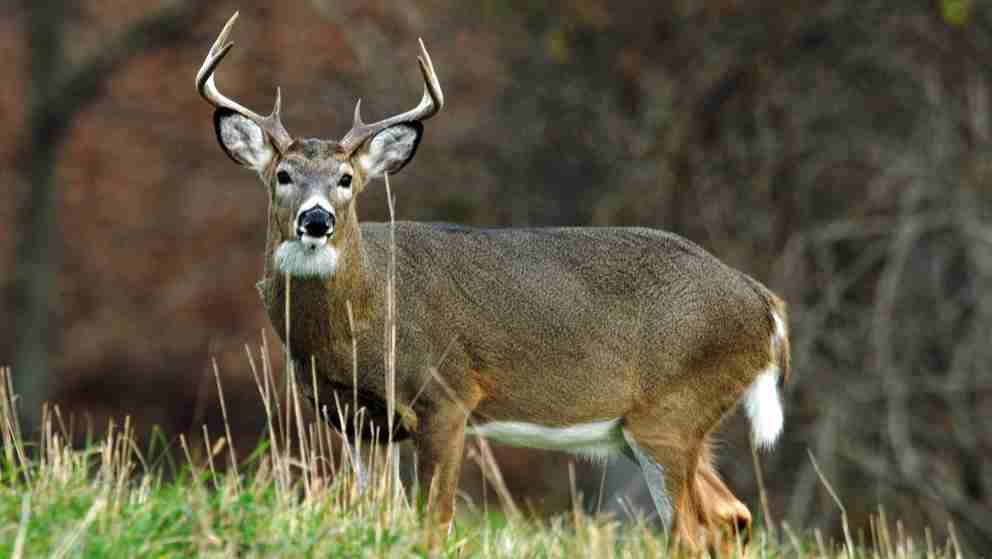 Amazing Facts of Deer