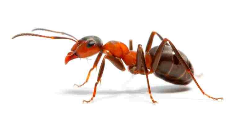 Ant Amazing Facts
