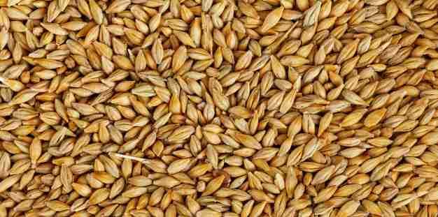 Barley Amazing Facts