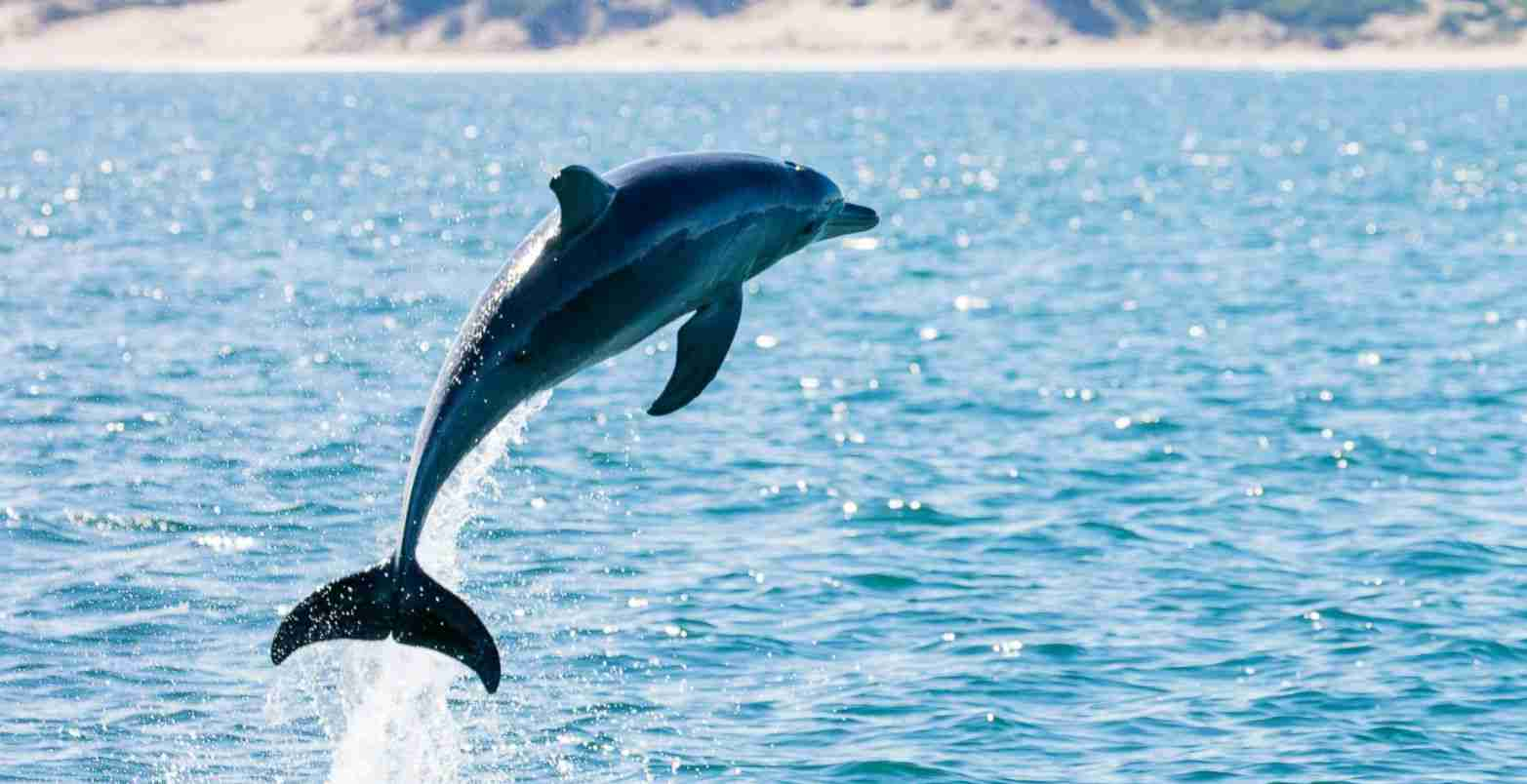 Dolphin Amazing Fun Facts For Kids