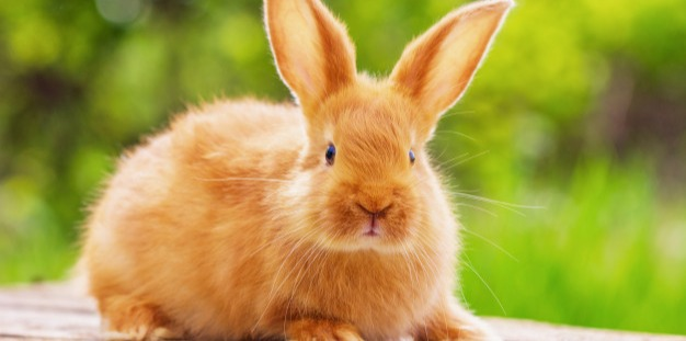 Here is a Bunny