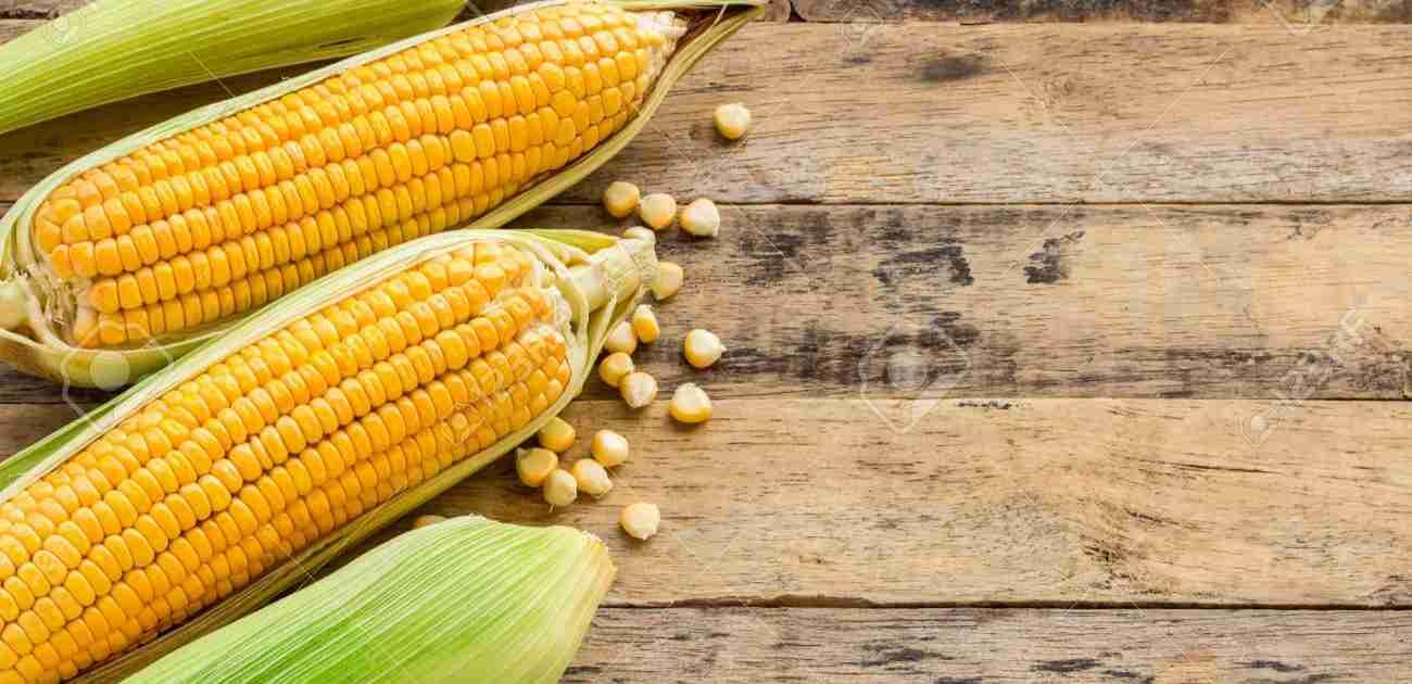 Maize Amazing Facts