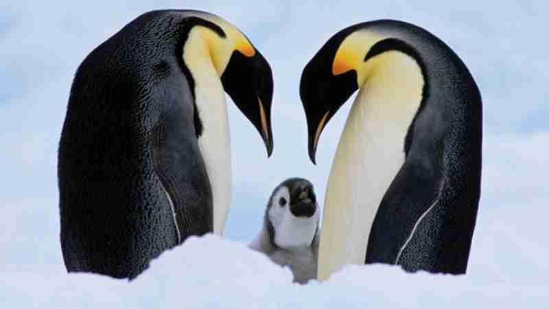 Penguin Amazing Facts