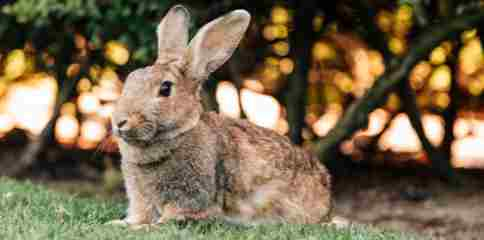 Rabbit Amazing Facts