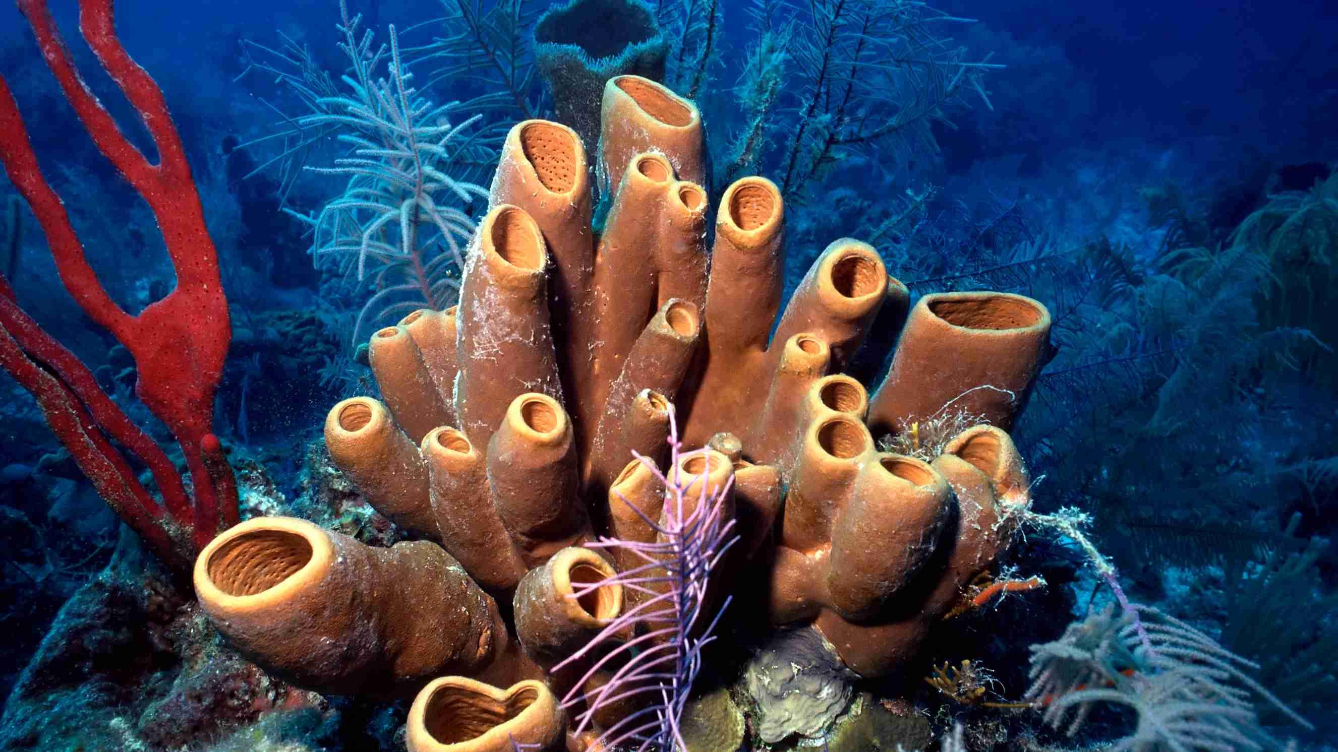 Sea Sponge Amazing Fun Facts For Kids