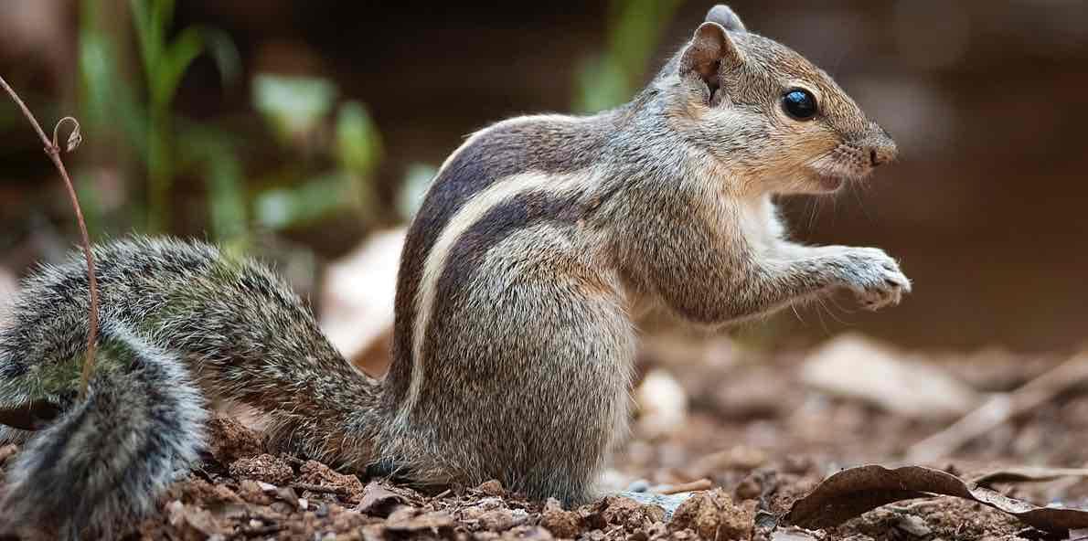 Squirrel Amazing Facts