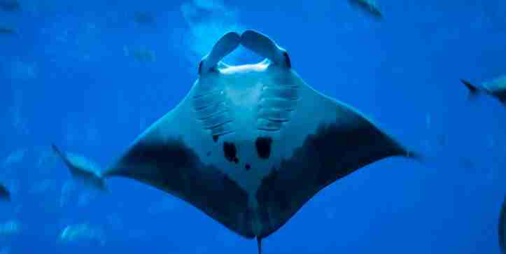 Stingray Amazing Fun Facts For Kids