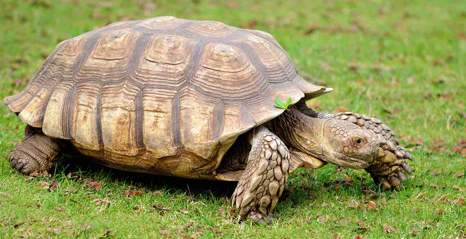 Tortoise Amazing Fun Facts For Kids