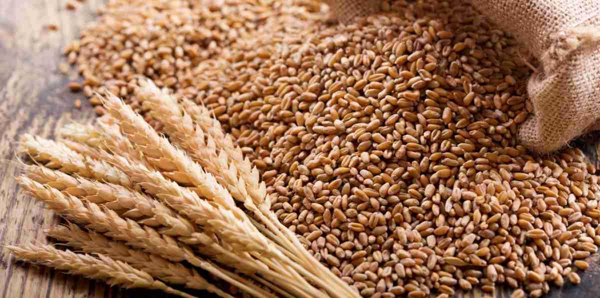 Wheat Amazing Facts