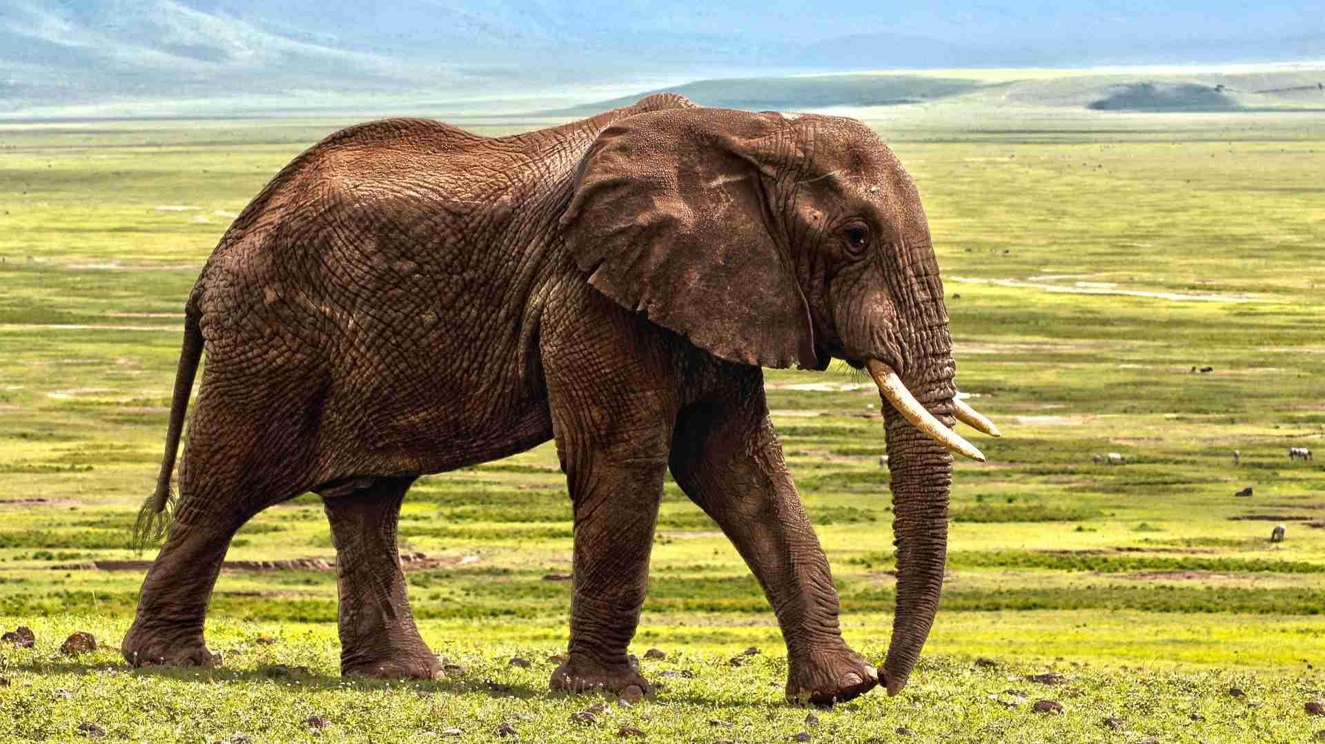 Elephant GK Facts
