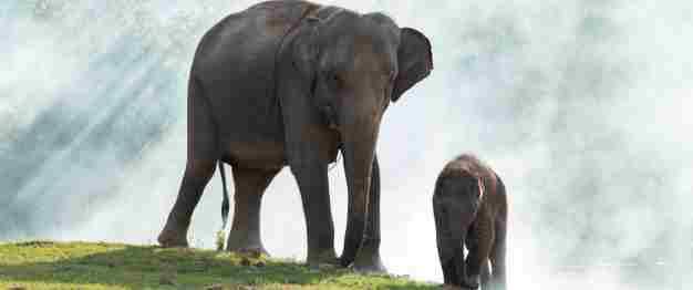 Elephant Amazing Facts