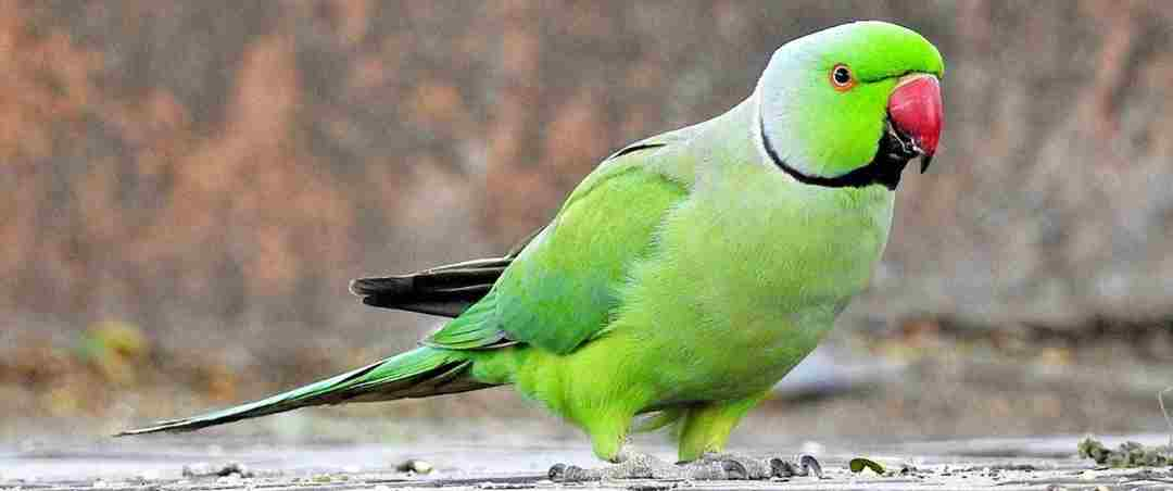 Parrot Amazing Facts