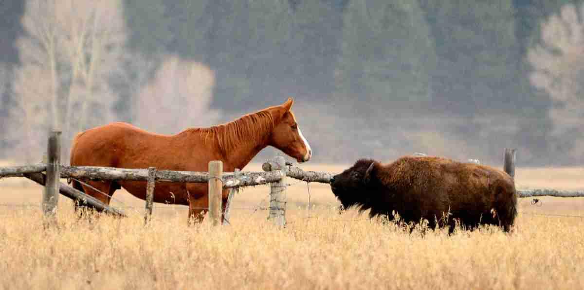 The Horse's revenge