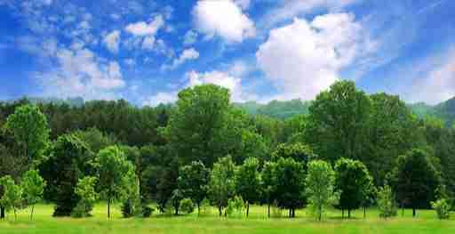 લીલા છમ્મ વૃક્ષ
