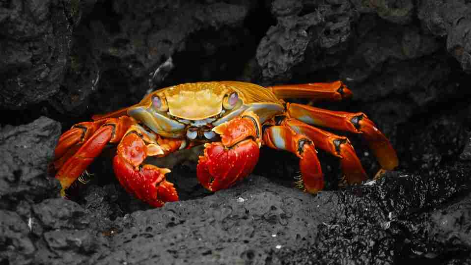 Crab Amazing Fun Facts For Kids