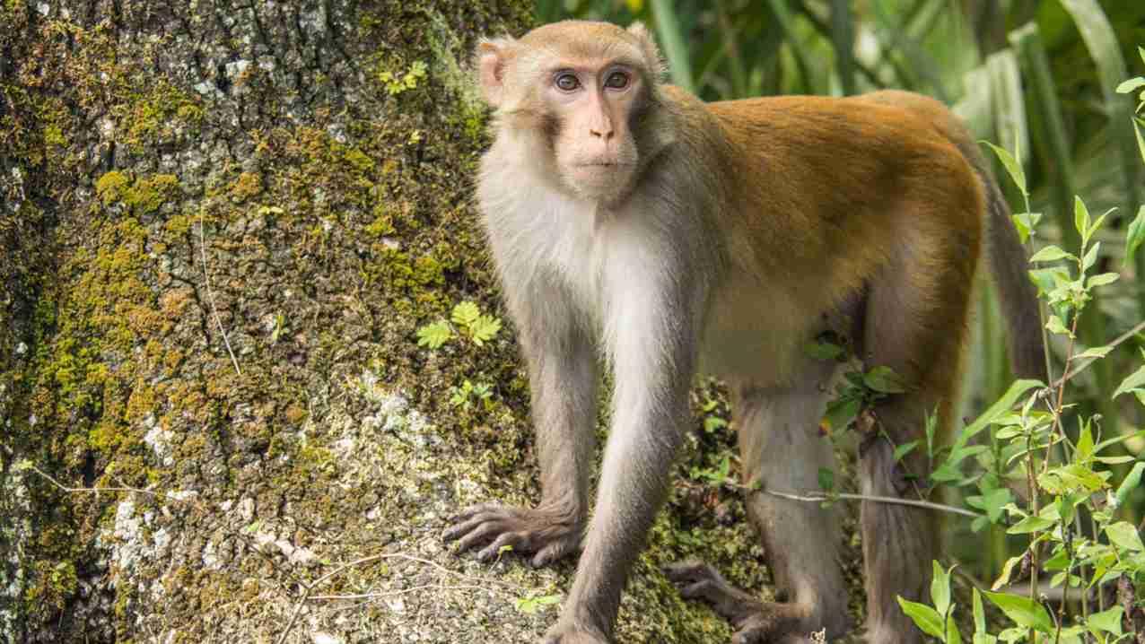Monkey GK Facts